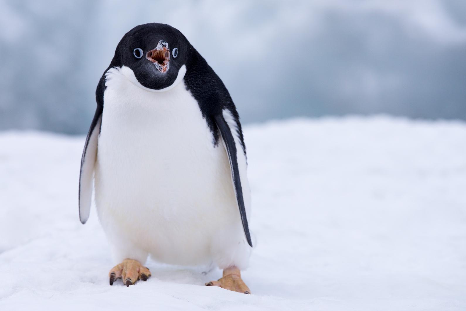 Antarctica1_SL_17
