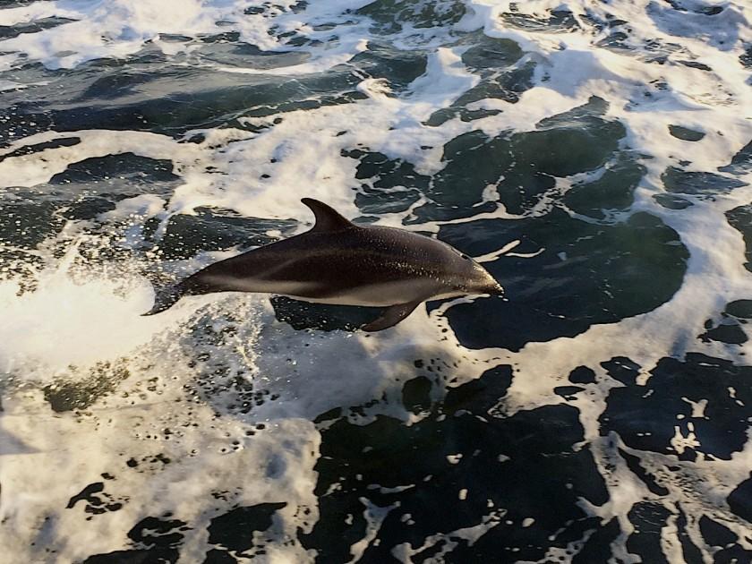 Auf See – Richtung Falklandinseln