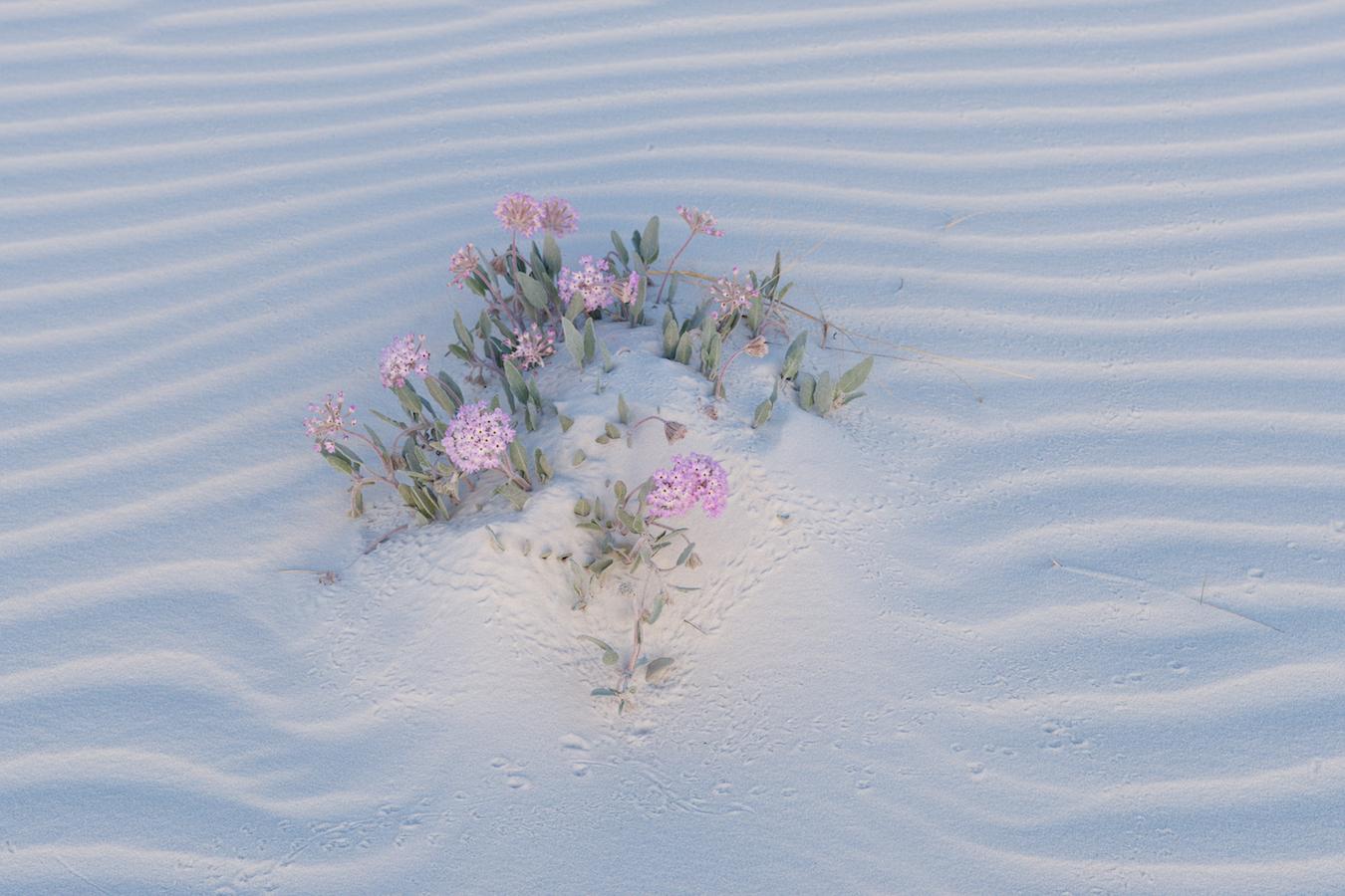 Nur wenige Pflanzen können unter diesen Bedingungen «Fuss fassen».