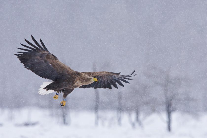 Birdsafari Sweden